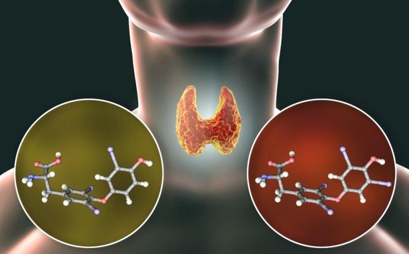 Unbekannte Dickmacher: Durch Chemikalien im Essen wird unser Stoffwechsel gestört