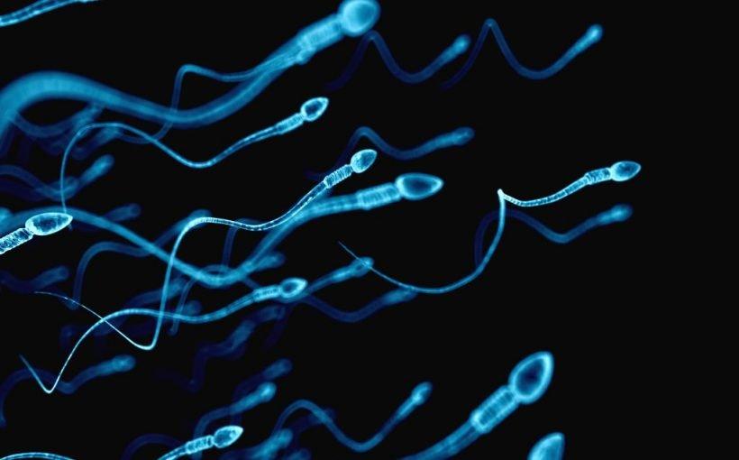 Fehlgeburten: Oftmals schlechte Spermien-Qualität des Mannes kann Schuld sein
