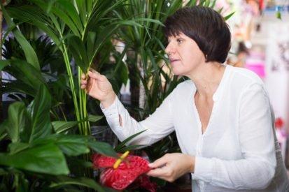 Studie: So schützen Zimmerpflanzen uns vor Erkältungs- und Grippeviren