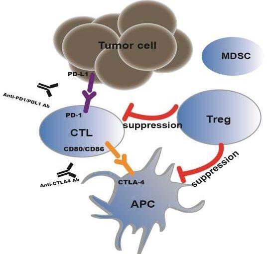 Regulierung und mögliche drug targets auf tumor-Tregs assoziiert
