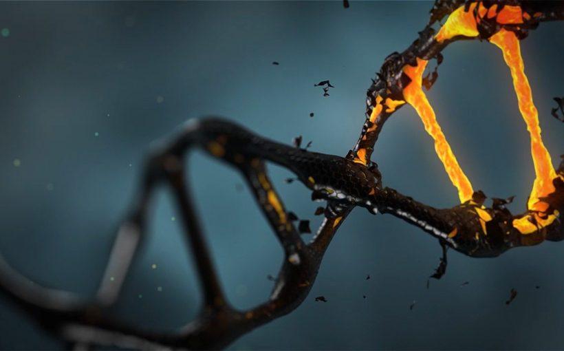 Mosaik-wie die gen-deletion und Duplikation Muster der Gestaltung des Immunsystems entdeckt