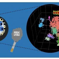 Nikotin kann Schäden an menschlichen Embryonen bei der Einzel-Zell-Ebene