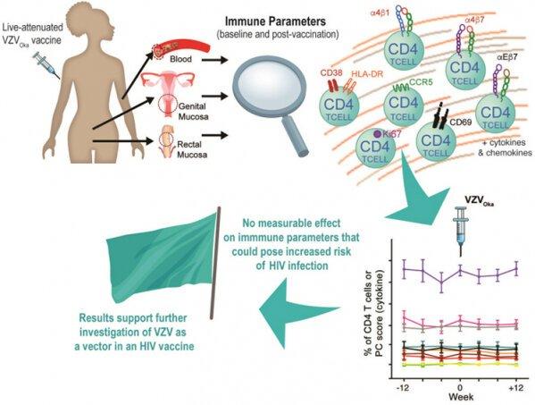 Forschung auf dem Windpocken-virus ebnet den Weg für Erfolg versprechende HIV-Impfstoff