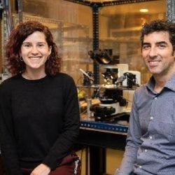 Forscher entdecken eine neue Migräne-assoziierten Mechanismus