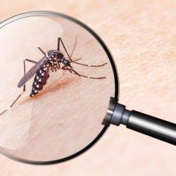 Nahende Mücken-Plage- In Deutschland auch neue Krankheiten angekündigt