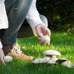 Entdeckt: Verzehr von Pilzen hält unser Gedächtnis auf Trab