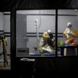 Überlebender Antikörper löscht Pfad für neue Ebola-Impfstoff