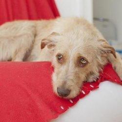 Tödliches Hundevirus breitet sich aus! Veterinäramt mahnt Hundebesitzer zur Vorsicht