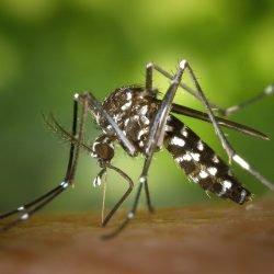 Tansanias Regierung kündigt Ausbruch von dengue-Fieber