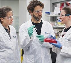 Gen schützt vor Ausbruch der akuten Leukämie