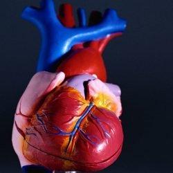 In schweren, asymptomatischer Aortenstenose, frühzeitige Operation kann helfen