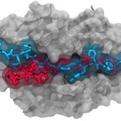 Neu entdeckte Immunzellen verbunden mit Typ-1-diabetes
