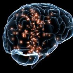 Gesunde Entwicklung des Gehirns ist ein Menschenrecht, Forscher argumentiert