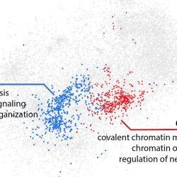 Künstliche Intelligenz erkennt eine neue Klasse von Mutationen hinter Autismus