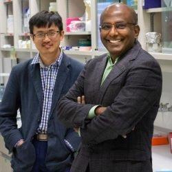 Forscher entwickeln neue Behandlung helfen könnte, die zum Schutz von Menschen mit Herz-Kreislauf-Erkrankungen