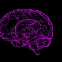 Tut stimulation des Gehirns dorsalen anterioren insula auslösen ecstasy?