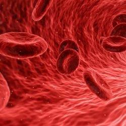 Antikörper-Behandlung ermöglicht die Transplantation von nicht übereinstimmenden Stammzellen, Geweben bei Mäusen