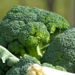 Wenn Sie gefragt werden, der richtige Weg, Kleinkinder wählen broccoli-Kuchen, Studie findet