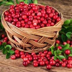 Blaseninfektionen: Wie Cranberries Bakterien empfindlicher für Antibiotika machen