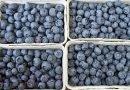 Welches Obst und Gemüse hat im Juni Saison?