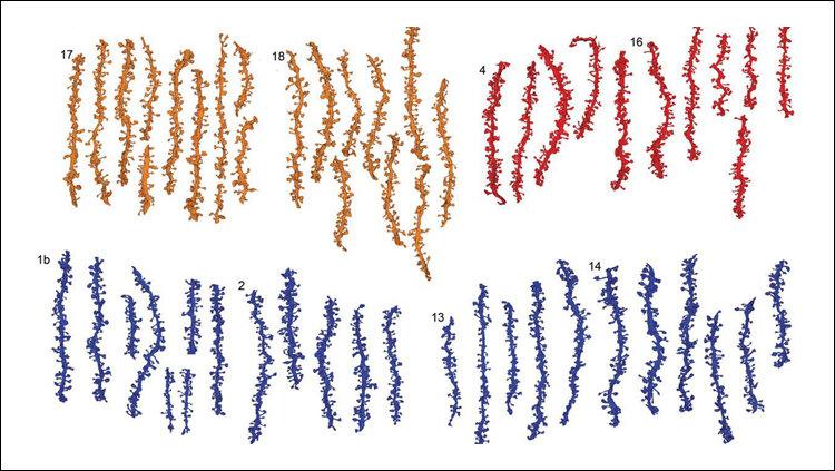 Schlaf-Fit Synapsen für das lernen