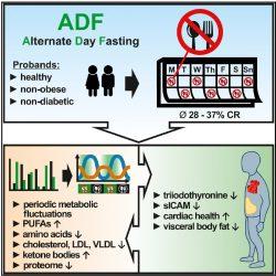 Klinische Studie zeigt eine Alternative-Tage-Fasten-eine sichere alternative zur Kalorienzufuhr