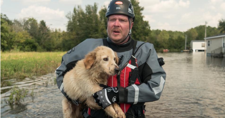 ASPCA Fordert die Besitzer sind Tiere in Not-Pläne Als Orkan Dorian Ansätze