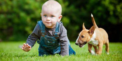 Hundeschule für Babys? Nur wenn Sie möchten, zu erhöhen, die Kinder sind unruhig und unsympathisch