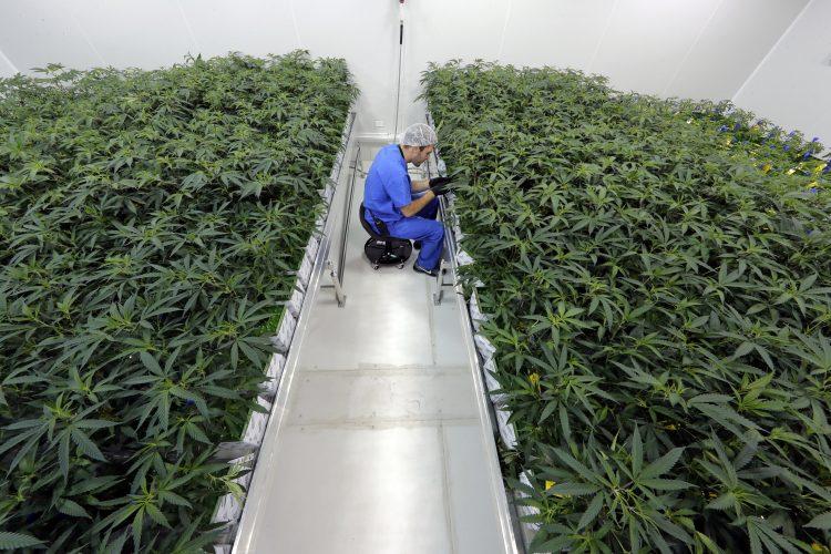 Züchter: 5.000 in Louisiana medizinischen Marihuana-Programm so weit