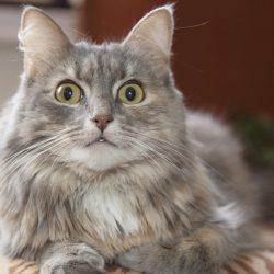 Können Haustiere Leiden unter Angst?