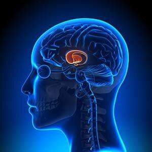 Die Studie nutzt die Echtzeit-fMRT zur Behandlung von Tourette-Syndrom