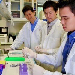Die Forscher untersuchen die Mechanismen, die hinter Lern-und Langzeitgedächtnis im Gehirn