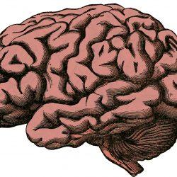 Das erlernen Motorischer Fähigkeiten erfordert, die 'Gefühl' Teil des Gehirns