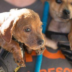 Tier-Unternehmen Müssen BEREIT Sein, für Naturkatastrophen—werden Sie aktiv!