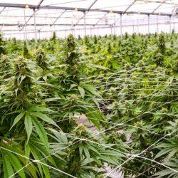 Hilft Cannabis bei Depression, ADHS oder Angst?