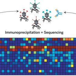 Einzelheiten der Studie, den Mechanismus und Umfang der Masern-induzierte immun-Amnesie im Zuge der Infektion