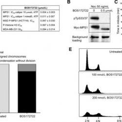 Neue evolution-sprengende Droge überwindet Resistenz in aggressiven Brustkrebs