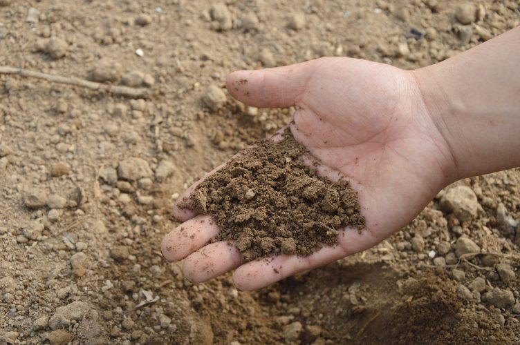 Biodiverse Boden Staub verbunden reduziert Angst