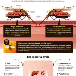 Entdeckung ebnet den Weg für die Sperrung malaria-übertragung in Brasilien