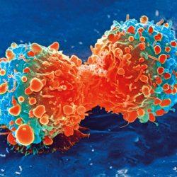 Was macht ein Krebs-test?