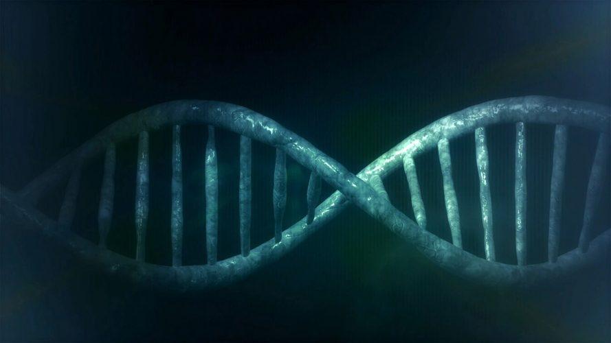 Simulationen deuten embryo-Auswahl, basierend auf Eigenschaften wie Körpergröße oder IQ ist noch weit Weg