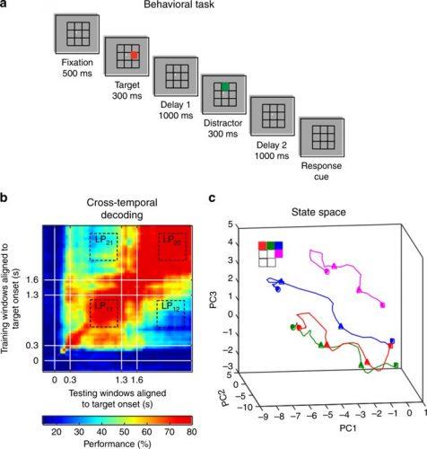 Mit machine-learning-tools zu zeigen, wie Erinnerungen sind codiert im Gehirn