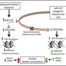 Jugendlichen Alkohol-erhöht die Angst, Alkoholmissbrauch im späteren Leben