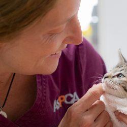 Die ASPCA Wieder Einmal Beteiligt sich an der Jährlichen Subaru Teilen die Liebe® - Event!