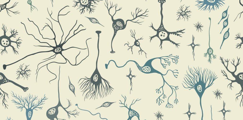 Ihr Gehirn macht Sie menschlich: Zählen Sie Ihre Neuronen, wenn Sie zählen Sie Ihre Segnungen