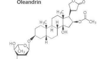 Medikament oleandrin ist möglicherweise eine effektive neue Möglichkeit zur Behandlung der HTLV-1-virus, Studie zeigt,