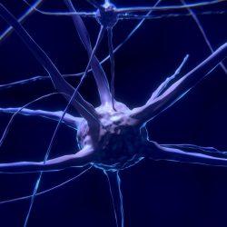 Schwere kindheit Entbehrung hat langjährige Auswirkungen auf die Größe des Gehirns im Erwachsenenalter