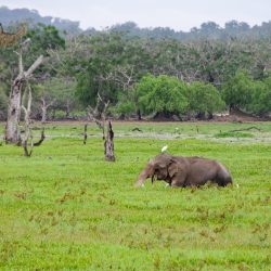 Sri Lanka bestätigt ersten Fall von neuer virus, ein chinesischer tourist