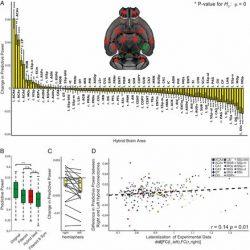 Die Bedeutung der individualisierten Modelle für das Verständnis der Funktion des Gehirns