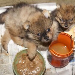 Blackout Vorbei? Der Kongress Verlangt, Dass die USDA Wiederherstellen Tierschutz Records